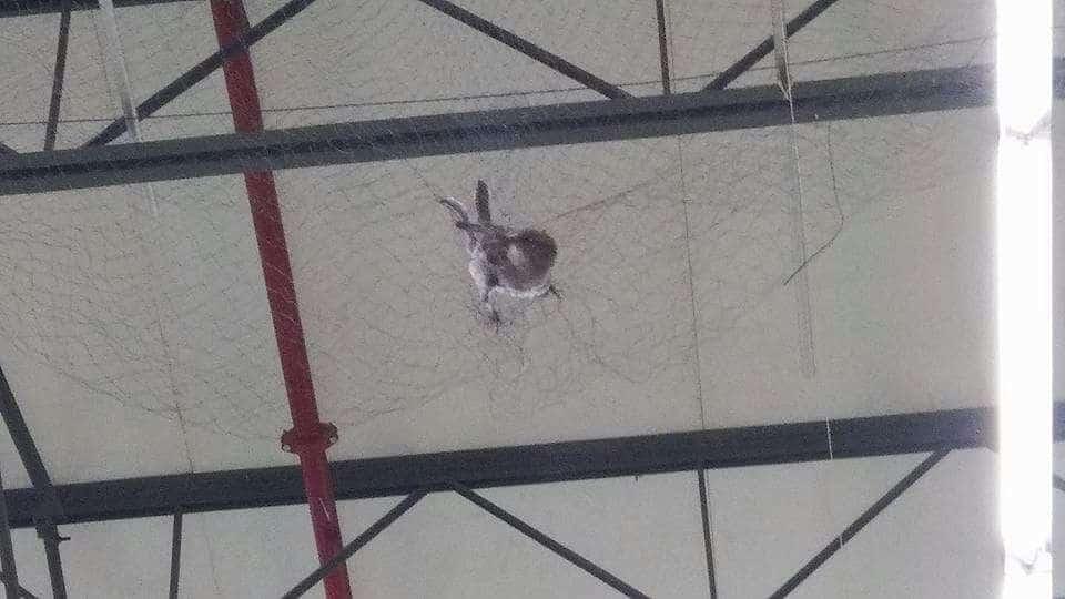 Photo of Aurrerá pone trampas para pájaros en una tienda; hay clientes indignados