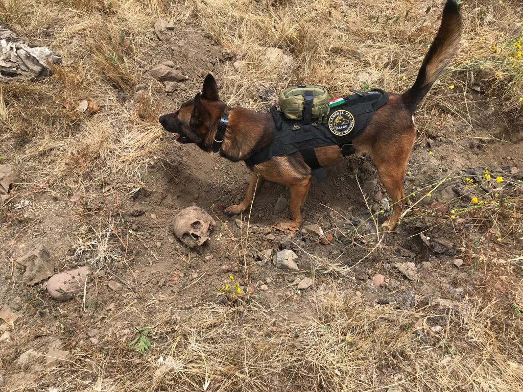 Photo of Localizan restos humanos y un cuerpo reciente en Tijuana