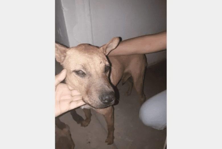Photo of Denuncian abuso contra perrita, el agresor la atacó con un palo