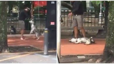 Photo of VIDEO: Exhiben a entrenador de perros maltratando a un Husky