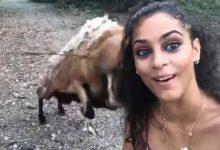 Photo of Por una selfie chica es tremendamente golpeada por una cabra