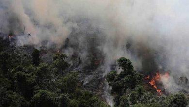 Photo of ¡Arde la Amazonia sin control!