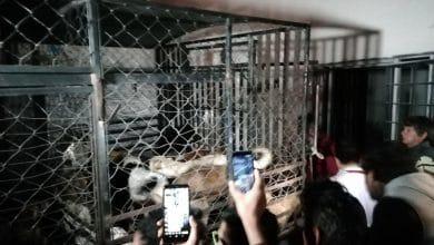 Photo of Mataperros usaba restos de animales para alimentar a sus hijos