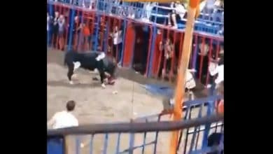 Photo of VIDEO: Niño cae al ruedo desde las gradas y toro lo ataca