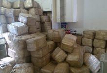 Photo of Hallan casi dos mil kilos de marihuana en casa de Tijuana