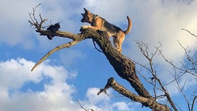 Photo of Perro queda atrapado arriba de un árbol por perseguir un gato