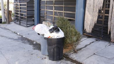 Photo of Habilitan centros de acopio de árboles navideños