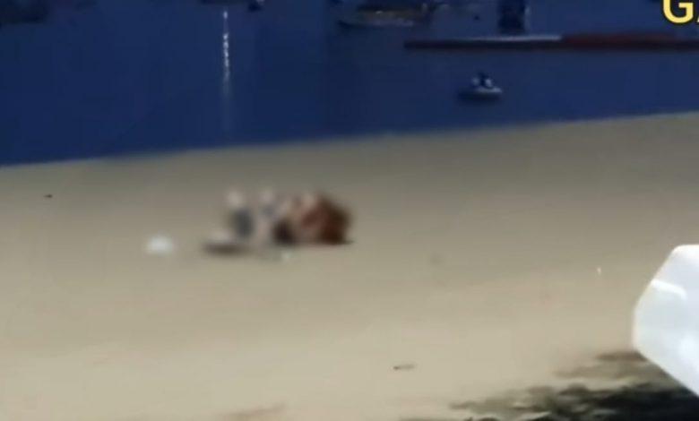Photo of Pareja de turistas intimó en público y los obligan a disculparse