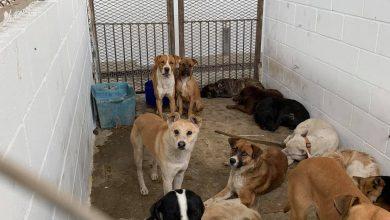 Photo of Realizan adopción masiva para evitar que animales fueran sacrificados
