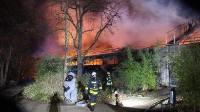 Photo of Pirotecnia provoca incendio en Zoológico y mueren 30 monos