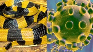 Photo of Una serpiente de venta en Wuhan sería el origen del coronavirus