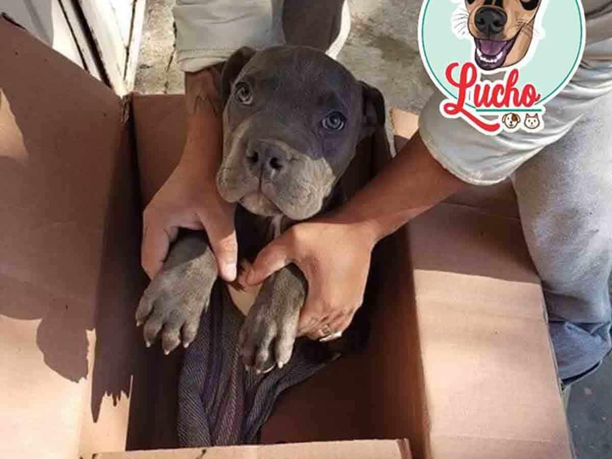 Photo of La desgarradora carta de un niño tras abandonar a su perrito