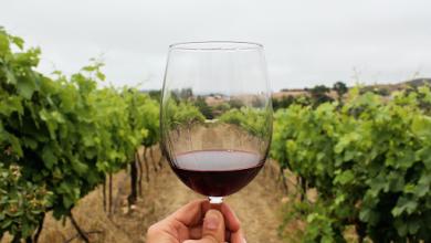 Photo of Cambio climático amenaza la producción de vinos