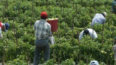 Photo of Otorgarían nacionalidad canadiense a trabajadores latinoamericanos