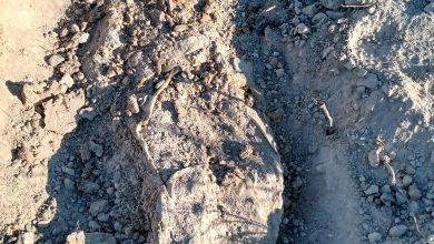 localizan-cuatro-cadaveres-en-otra-fosa-clandestina-de-tijuana