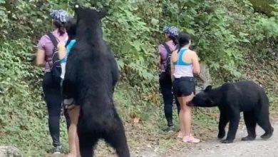 esta-es-la-selfie-que-tomo-la-chica-del-oso