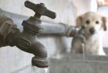 Photo of Colonias sin agua para este sábado 24 de octubre