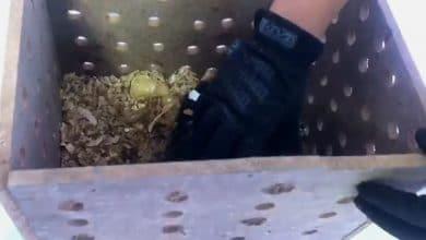 Photo of Hallan mono araña deshidratado en paquetería de aeropuerto