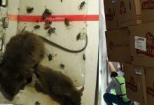 Photo of Insectos, roedores y más en el almacén de una refresquera