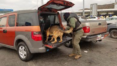 Photo of Decomisan fuerte cantidad de droga a metros de la Garita