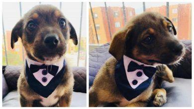 Photo of 'Vicente', el perrito que plantaron el día de su adopción