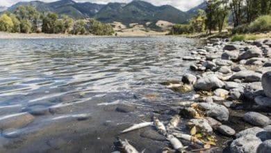 Aparecen-cientos-de-peces-muertos-en-orillas-del-río