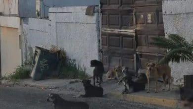 Photo of Jauría asesina en Tijuana deja otra víctima