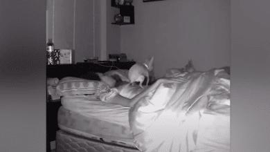 video-perro-aprovecha-que-su-duena-dormia-para-hacerle-popo-encima