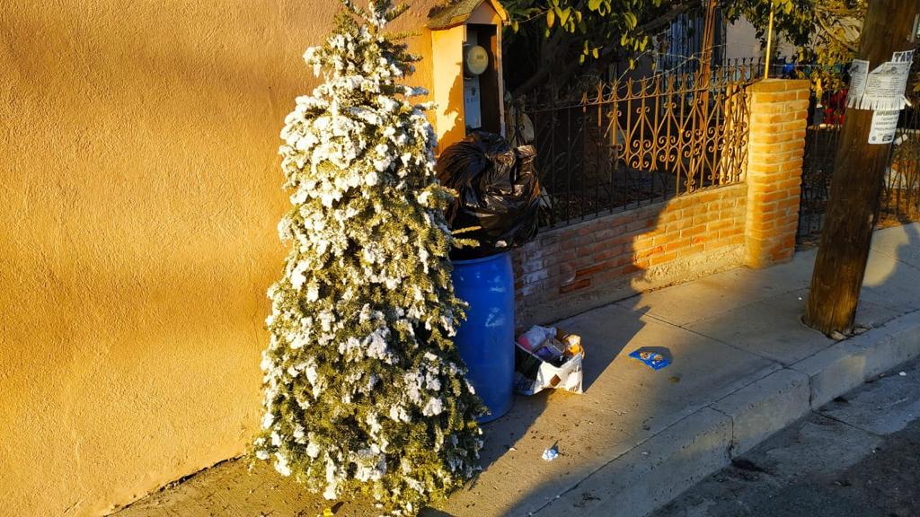 municipio-recolecta-arboles-navidenos-colonias-alejadas