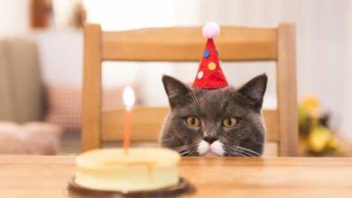 celebran-cumpleanos-de-gato-y-15-se-contagian-de-covid