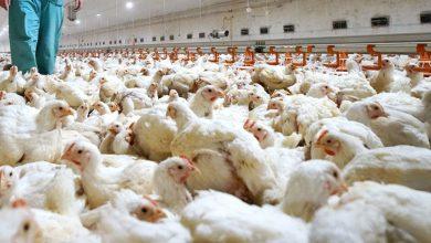 Detectan-primer-contagio-con-cepa-de-gripe-aviar-a-humano