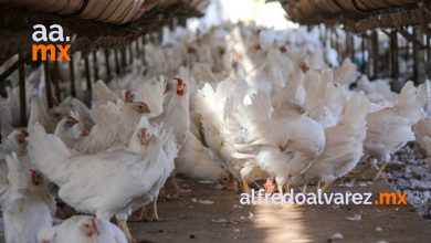 baja-california-libre-de-gripe-aviar