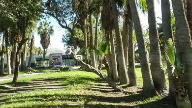Alberga-Tijuana-209-parques-atendidos-de-manera-continua