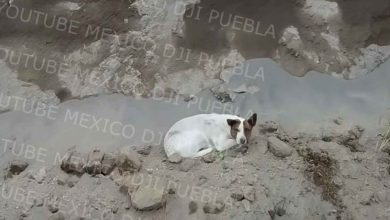 descubren-que-otro-perrito-cayo-al-mega-socavon